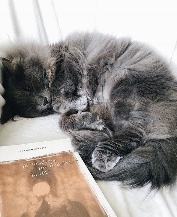 >>> «Je voudrais me déposer la tête» de Jonathan Harnois est le livre que… (via facebook)