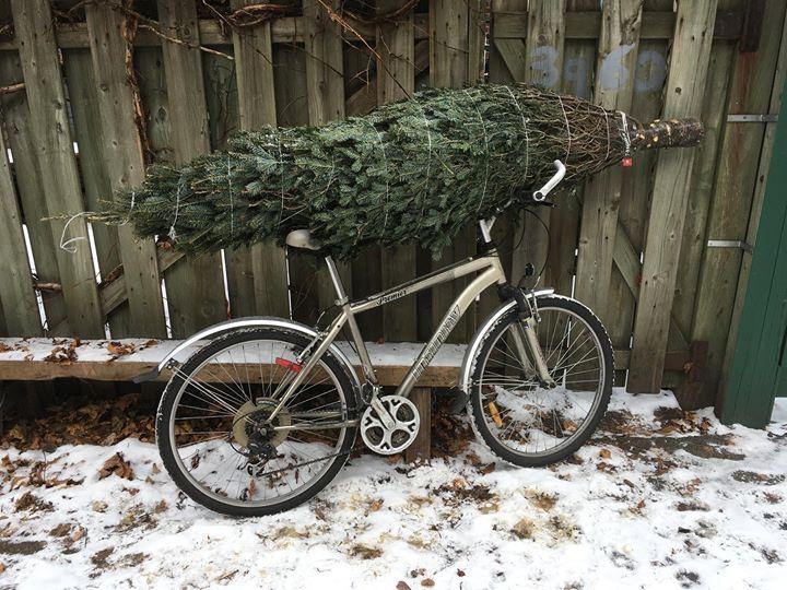 L'histoire de mon sapin: arrivé en vélo, il a tenu durant la première tempête,… (via facebook)